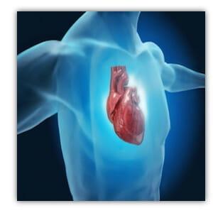 fbk heart10b